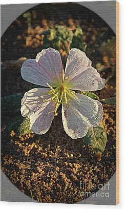 Wood Print featuring the photograph Vignette Evening Primrose by Robert Bales