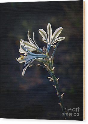 Wood Print featuring the photograph Vignetted Ajo Lily by Robert Bales