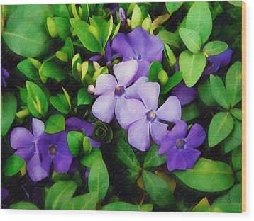 Wood Print featuring the photograph Vinca by Sandy MacGowan