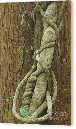 Wood Print featuring the photograph Vine by Werner Padarin
