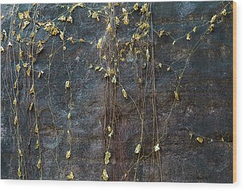 Wood Print featuring the photograph Vines On Rock, Bhimbetka, 2016 by Hitendra SINKAR