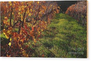 Vineyard 13 Wood Print by Xueling Zou