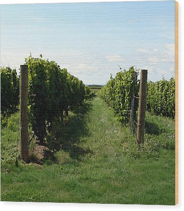 Vineyard On The Peninsula Wood Print by Michelle Calkins