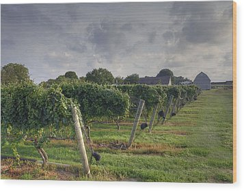 Vineyard With  Barn Wood Print by Steve Gravano