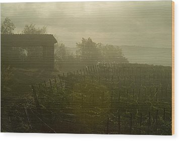 Vineyards Beside A Villa In The Fog Wood Print by Todd Gipstein