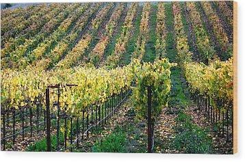 Vineyards In Healdsburg Wood Print by Charlene Mitchell