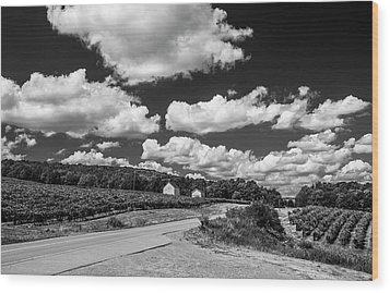 Wood Print featuring the photograph Vineyards In Summer II by Steven Ainsworth
