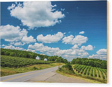 Vineyards In Summer Wood Print by Steven Ainsworth