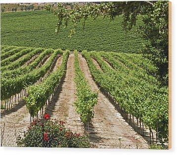 Vineyards In The Galilee 2 Wood Print