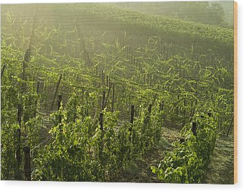 Vineyards Shrouded In Fog Wood Print by Todd Gipstein