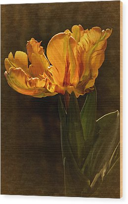 Wood Print featuring the photograph Vintage 2017 Tulip by Richard Cummings