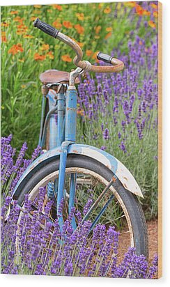 Wood Print featuring the photograph Vintage Bike In Lavender by Patricia Davidson