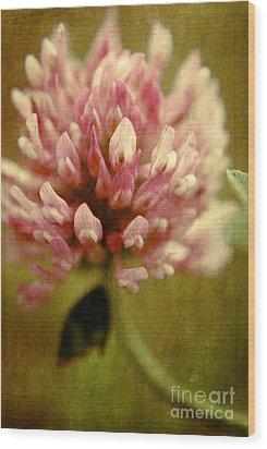 Vintage Clover Wood Print by Aimelle
