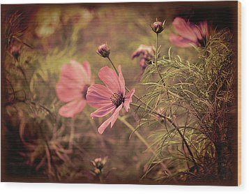 Wood Print featuring the photograph Vintage Cosmos by Douglas MooreZart