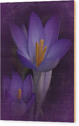 Wood Print featuring the photograph Vintage Crocus 2017 by Richard Cummings