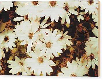 Vintage Daisies Wood Print by Denice Breaux