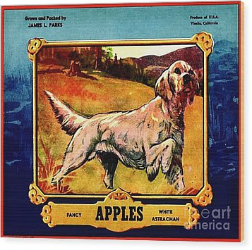 Vintage English Setter Apples Advertisement Wood Print by Peter Gumaer Ogden