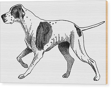 Vintage German Shorthaired Pointer Wood Print by Marian Cates
