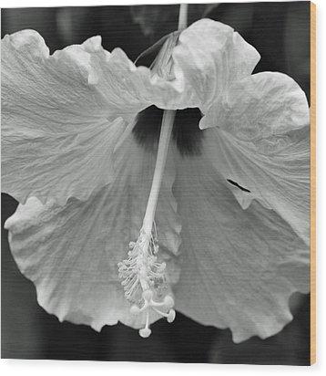 Vintage Hibiscus II Wood Print by Melanie Moraga