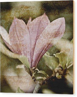 Vintage Magnolia Wood Print by Frank Tschakert