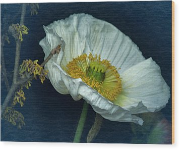 Wood Print featuring the photograph Vintage Poppy 2017 No. 2 by Richard Cummings