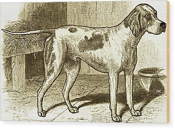 Vintage Sepia German Shorthaired Pointer Wood Print by Marian Cates