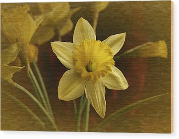 Vintage Yellow Narcissus Wood Print by Richard Cummings