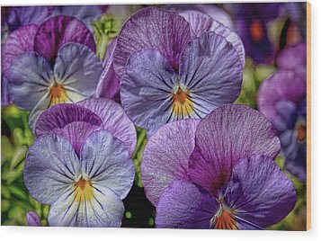 Wood Print featuring the photograph Viola by Bonnie Willis