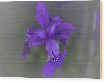 Violet Dream Wood Print by Bruce Pritchett