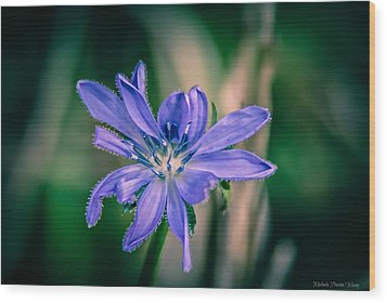 Wood Print featuring the photograph Violet by Michaela Preston
