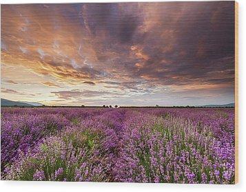 Violet Sunrise Wood Print by Evgeni Dinev