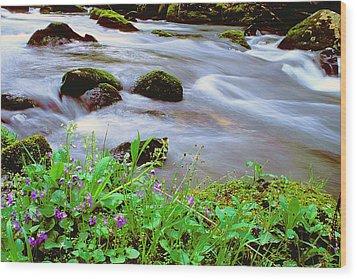 Violets Along Hazel Creek Wood Print by Alan Lenk