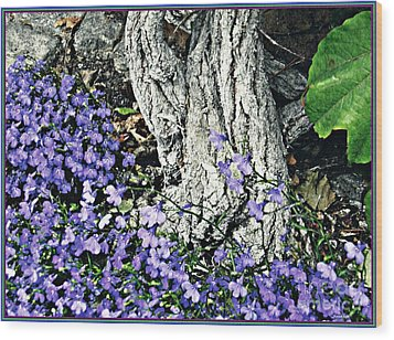 Violets At My Feet Wood Print by Sarah Loft