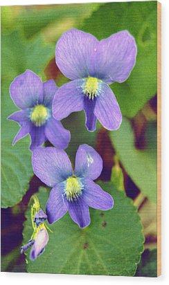 Violets Wood Print by Jame Hayes