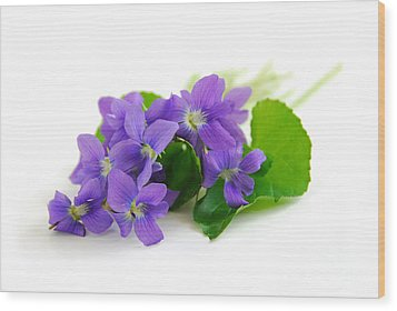 Violets On White Background Wood Print by Elena Elisseeva