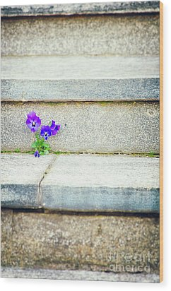 Wood Print featuring the photograph Violets    by Silvia Ganora
