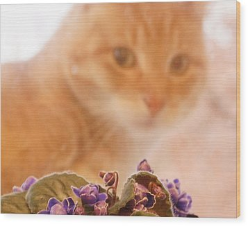 Violets With Cat Wood Print