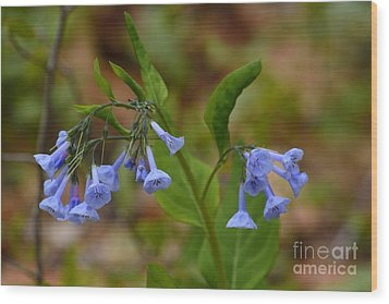 Wood Print featuring the photograph Virginia Bluebells by Randy Bodkins