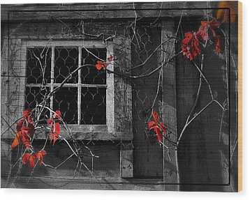 Virginia Creeper Wood Print by Thomas Schoeller