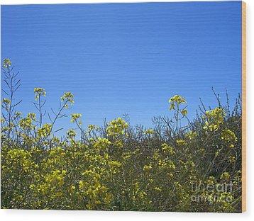Vista Flores Wood Print by Jim Thomson