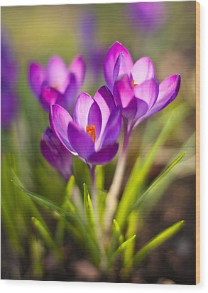 Vivid Petals Wood Print by Mike Reid