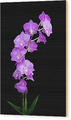 Vivid Purple Orchids Wood Print