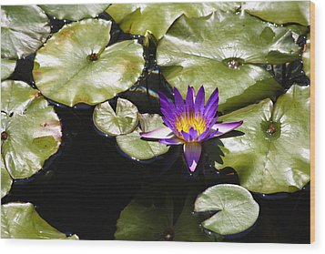 Vivid Purple Water Lilly Wood Print by Teresa Mucha