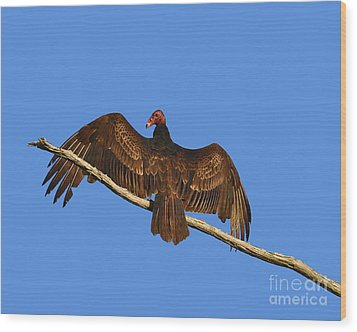 Wood Print featuring the photograph Vivid Vulture .png by Al Powell Photography USA