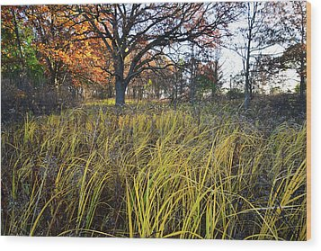 Wood Print featuring the photograph Volo Bog Fall Morning by Ray Mathis