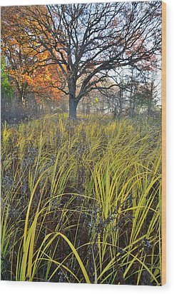 Wood Print featuring the photograph Volo Bog Natural Area by Ray Mathis