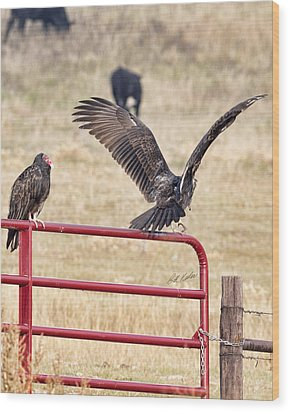 Wood Print featuring the photograph Vulture Vee by Bill Kesler