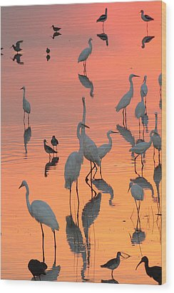 Wading Birds Forage In Colorful Sunset Wood Print by George Grall