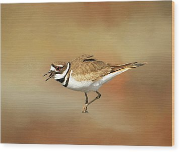 Wading Killdeer Wood Print by Donna Kennedy
