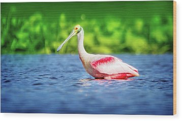 Wading Spoonbill Wood Print by Mark Andrew Thomas